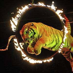 Цирки Большой Ижоры