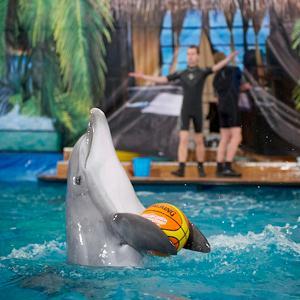 Дельфинарии, океанариумы Большой Ижоры