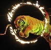 Цирки в Большой Ижоре