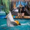 Дельфинарии, океанариумы в Большой Ижоре