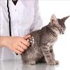 Ветеринарные клиники в Большой Ижоре